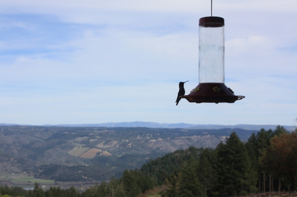The hummingbirds at Paloma also enjoy the view.