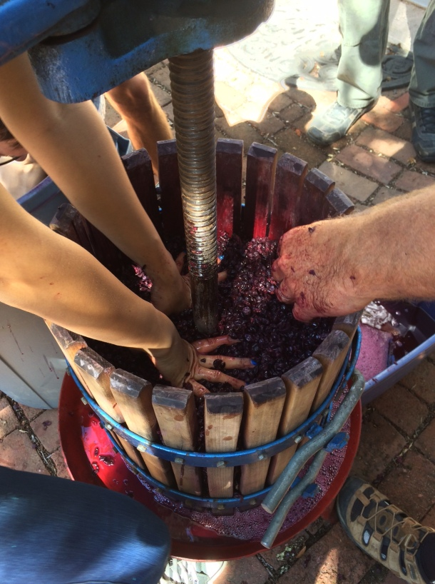 Pressing down the grapes to make room for more.
