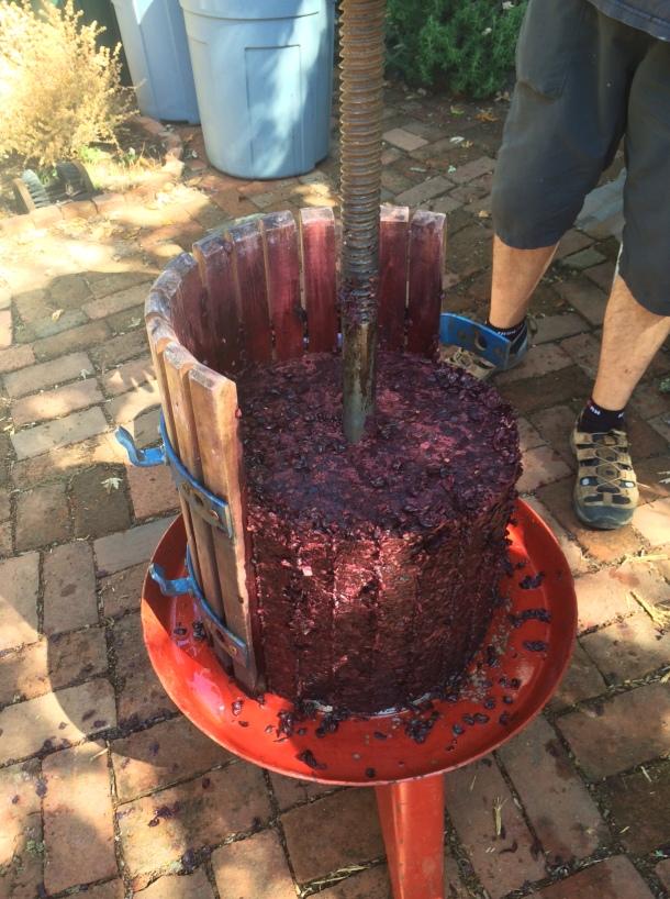 The grape cake!
